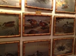 Wildfowl watercolours by Philip Rickman (Sussex artist) inside Bentley house