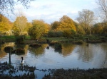 The Bentley wildfowl reserve in Autumn